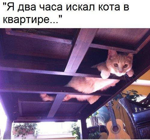 Я два часа искал кота в квартире... | #прикол