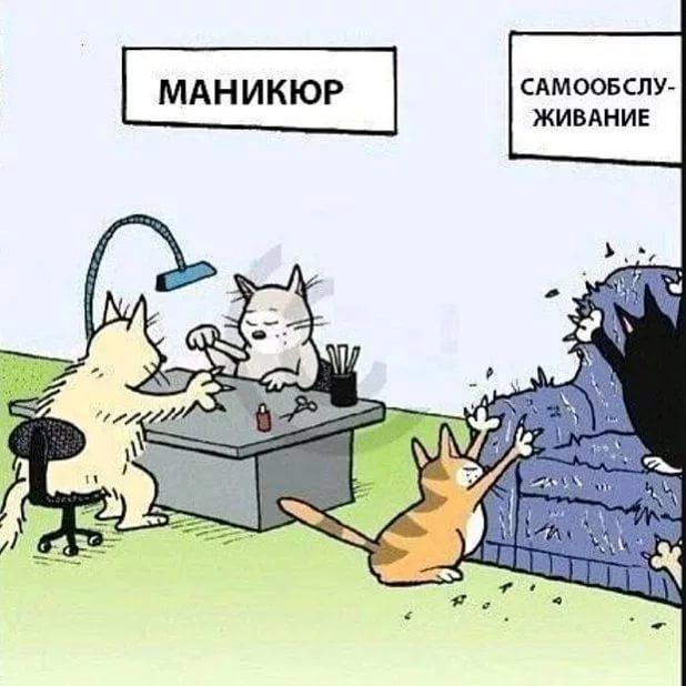 изображение: Почему коты дерут диван #Прикол