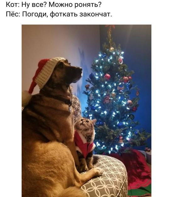 Кот: Ну все? Можно ронять? Пёс: Погоди, фоткать закончат. | #прикол