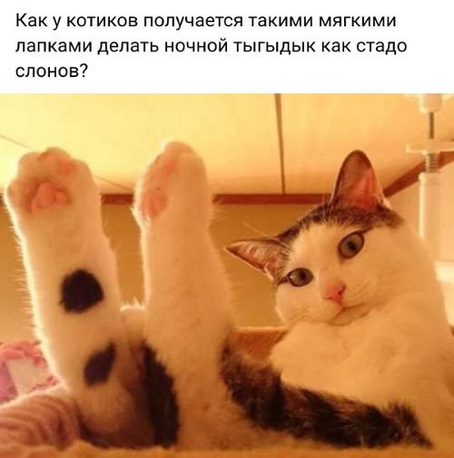 изображение: Как у котиков получается такими мягкими лапками делать ночной тыгыдык как стадо слонов? #Котоматрицы