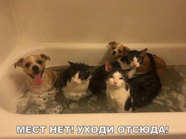 Как искупать кота - Фото | #прикол