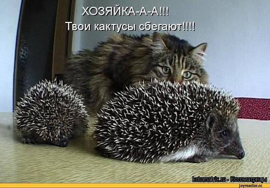 изображение: Хозяйка-а-а! Твои кактусы сбегают!!! #Котоматрицы