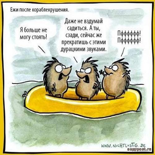 изображение: Ежи после кораблекрушения: - Я больше не могу стоять! - Даже не вздумай садиться. #Прикол