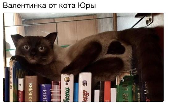 изображение: Валентинка от коты Юры #Котоматрицы