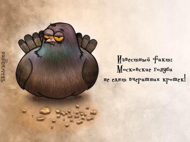 изображение: Известный факт: московские голуби не едят вчерашних крошек #Прикол