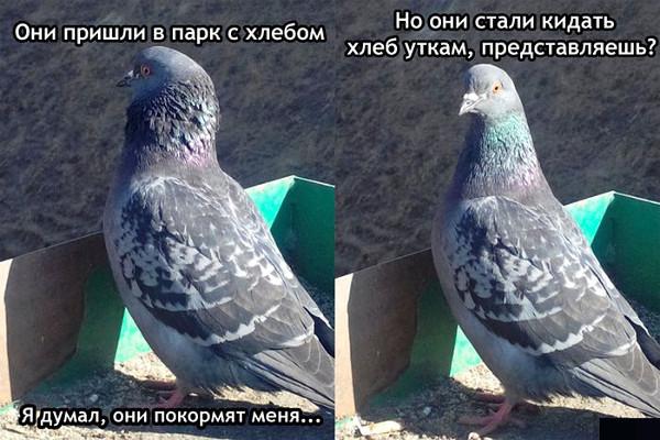 изображение: - Они пришли в парк с хлебом. Я думал, они покормят меня... Но они стали кидать хлеб уткам, предтавляешь? #Прикол