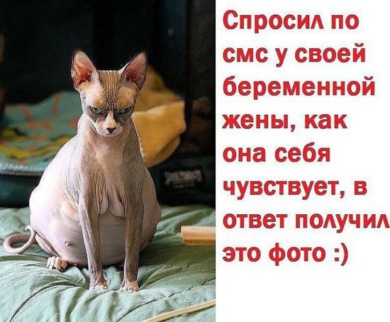 изображение: Спросил про СМС у своей беременной жены, как она себя чувствует, в ответ получил это фото. =) #Котоматрицы