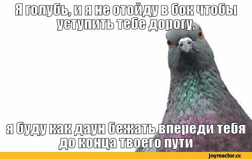 изображение: Я голубь, и я не отойду в бок, чтобы уступить тебе дорогу, я буду, как даун, бежать впереди тебя до конца твоего пути. #Прикол
