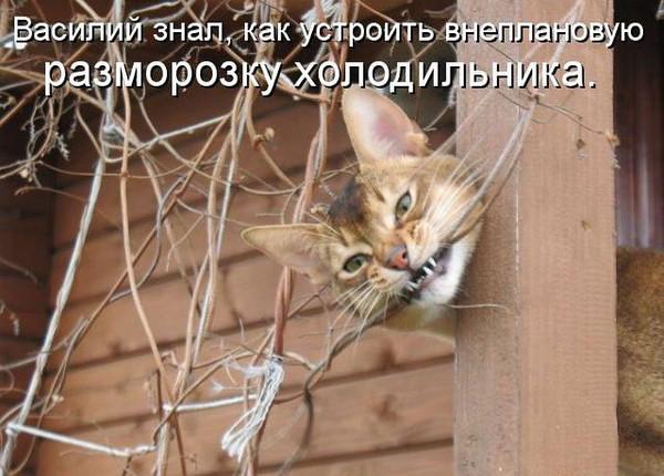 Кот Василий знал, как устроить внеплановую разморозку холодильника | #прикол