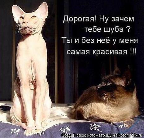 изображение: Дорогая? Ну зачем тебе шуба? Ты и без нее у меня самая красивая!!! #Котоматрицы