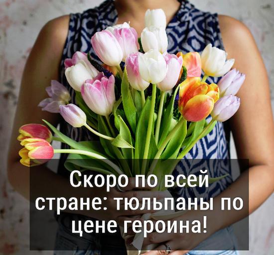 изображение: Скоро по всей стране: тюльпаны по цене героина! #Прикол