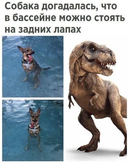 Собака догадалась, что в бассейне можно стоять на задних лапах | #прикол