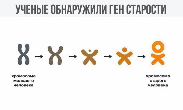 изображение: Ученые обнаружили ген старости: как выглядит хромосома молодого человека и хромосома старого человека #Прикол