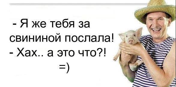 изображение: Иван пришёл домой с минипигом. Валюха: - Я же тебя за свининой послала! Иван: - Хах...а это что?! #Прикол