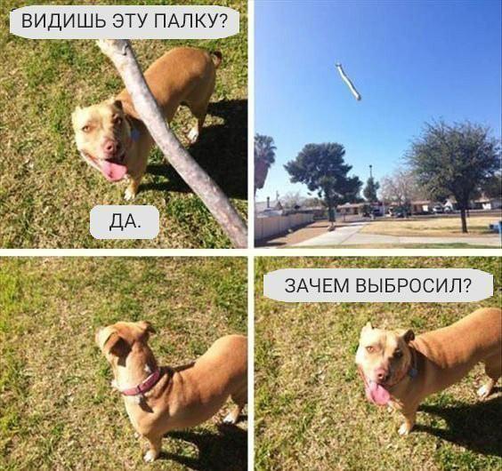 изображение: Хозяин собаке: - Видишь эту палку? - Да. Кидает палку. Собака: - Ну и зачем выбросил? #Прикол