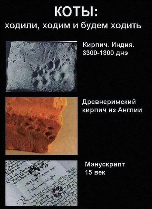 изображение: Коты: ходили, ходим и будем ходить. Кирпич. Индия. 3300-1300 до н.э. Древнеримский кирпич из Англии. Манускрипт 15 век. #Прикол
