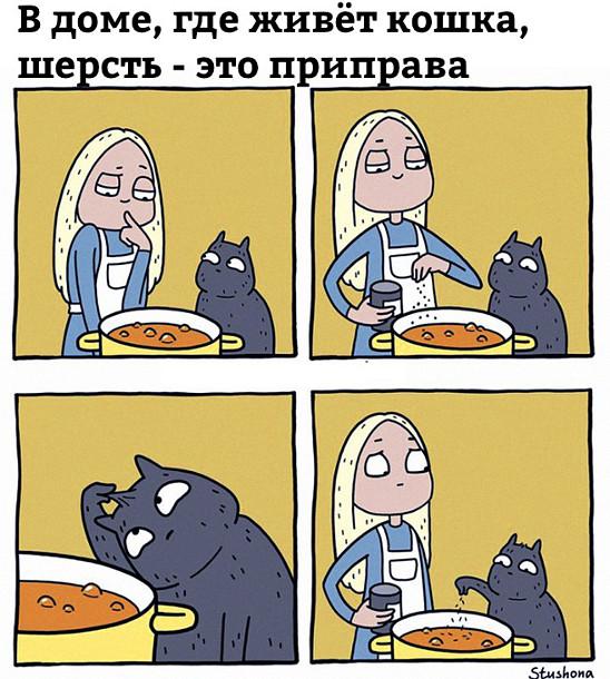 В доме, где живёт кошка, шерсть - это приправа | #прикол