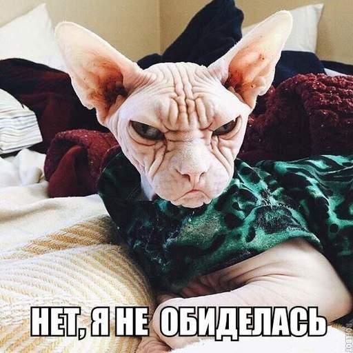 изображение: Нет, я не обиделась #Прикол