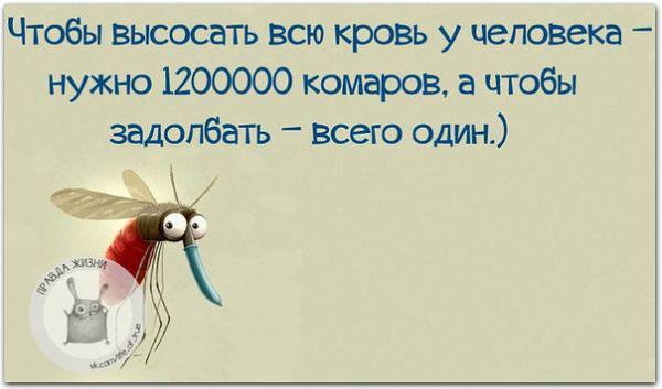 изображение: Чтобы высосать всю кровь у человека - нужно 1 200 000 комаров, а чтобы задолбать - всего один #Прикол
