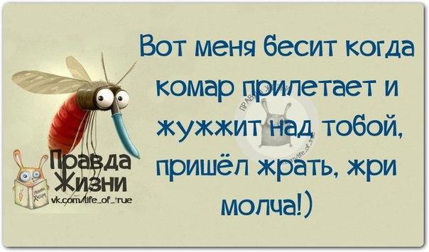 изображение: Вот меня бесит, когда комар прилетает и жужжит над тобой. Пришёл жрать - жри молча!!! #Прикол