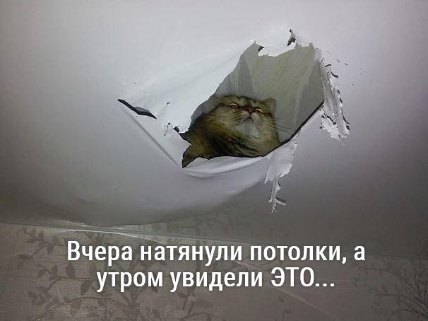 изображение: Вчера натянули потолки, а утром увидели ЭТО... #Прикол