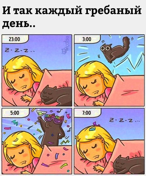 И так каждый грёбаный день - кот не дает спокойно спать ночью | #прикол