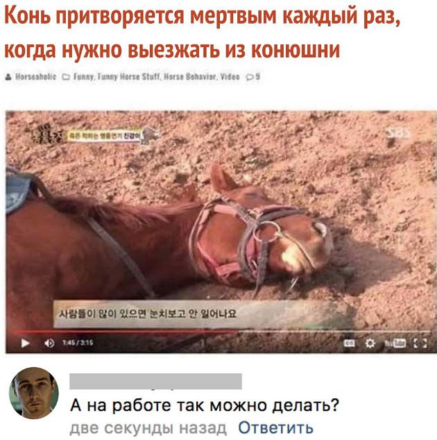 изображение: - Конь притворяется мёртвым каждый раз, когда нужно выезжать из конюшни. - А на работе так можно делать? #Прикол