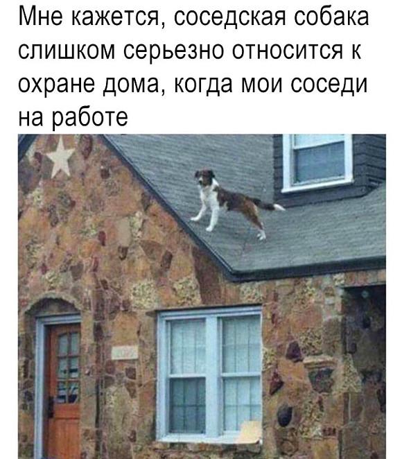 изображение: Мне кажется, соседкая собака слишком серьезно относится к охране дома, когда мои сосоеди на работе #Прикол
