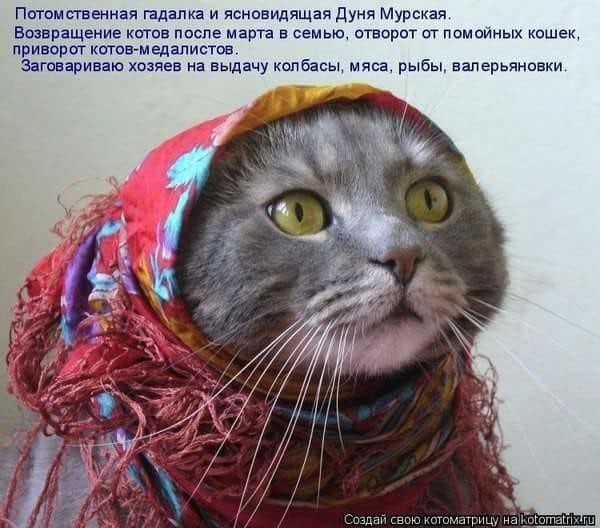 изображение: Потомственная гадалка и ясновидящая Дуня Мурская. Возвращение котов после марта в семью, отворот от помойных кошек, приворот котов-медалистов. Заговариваю хозяев на выдачу колбасы, мяса, рыбы, валерьянки. #Котоматрицы