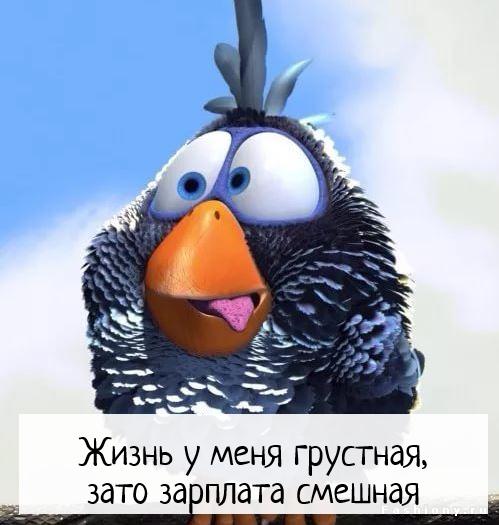 изображение: Жизнь у меня грустная, зато зарплата смешная #Прикол