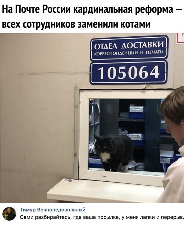 изображение: На Почте России кардинальная реформа - всех сотрудников заменили котами. - Сами разбирайтесь, где ваша посылка, у меня лапки и перерыв #Прикол