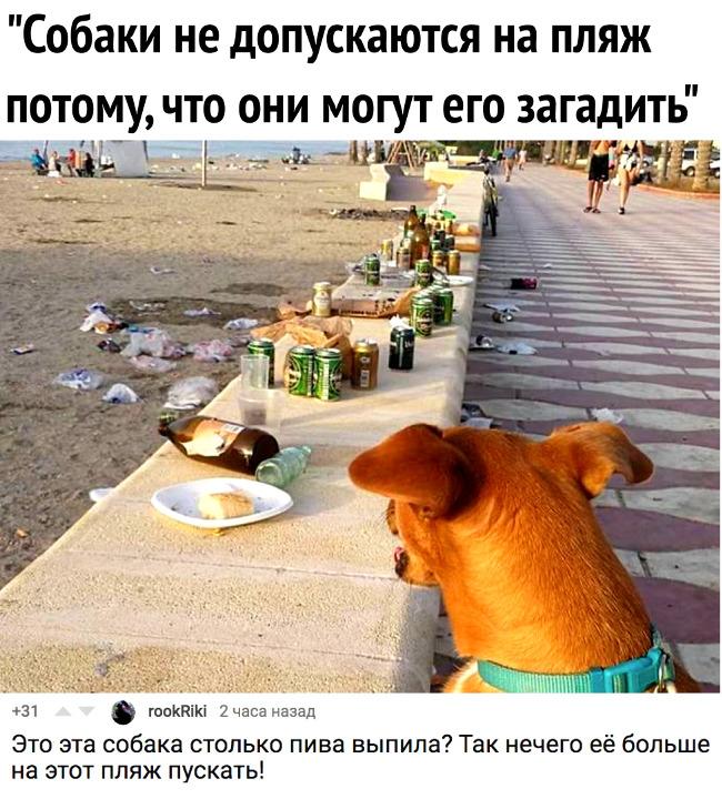 изображение: - Собаки не допускаются на пляж, потому что они могут его загадить. - Это эта собака столько пива выпила? Так нечего её больше на этот пляж пускать! #Прикол