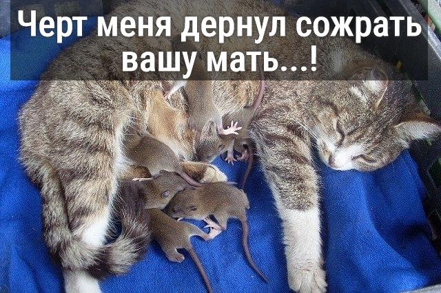 изображение: Черт меня дернул сожрать вашу мать...! #Котоматрицы