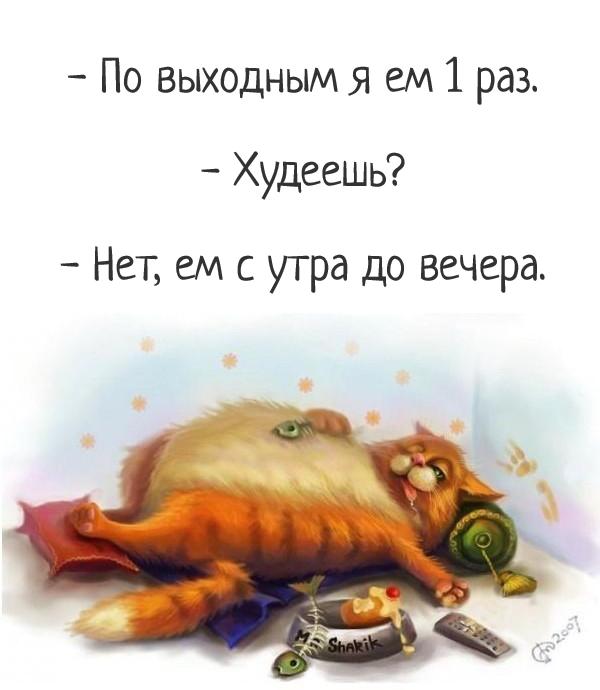 изображение: - По выходным я ем 1 раз. - Худеешь? - Нет, ем с утра до вечера. #Прикол