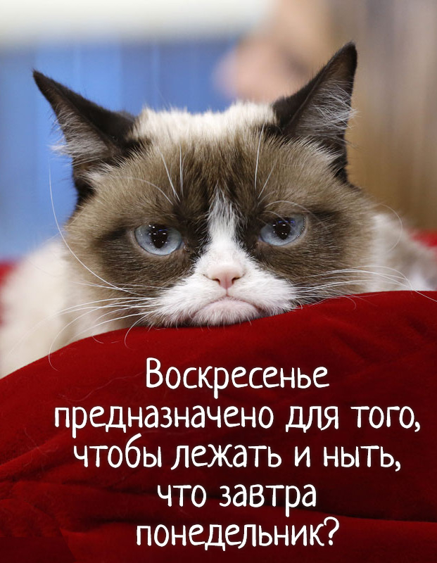 изображение: Воскресенье предназначено для того, чтобы лежать и ныть, что завтра понедельник? #Прикол