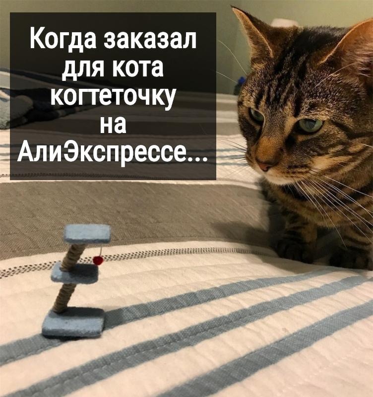 изображение: Когда заказал для кота когтеточку на АлиЭкспрессе... #Прикол