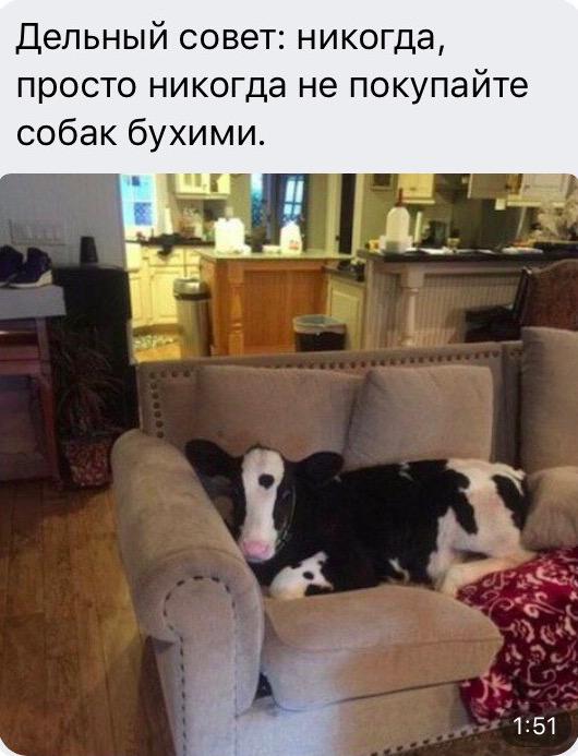изображение: Дельный совет: Никогда, просто никогда не покупайте собак бухими #Прикол
