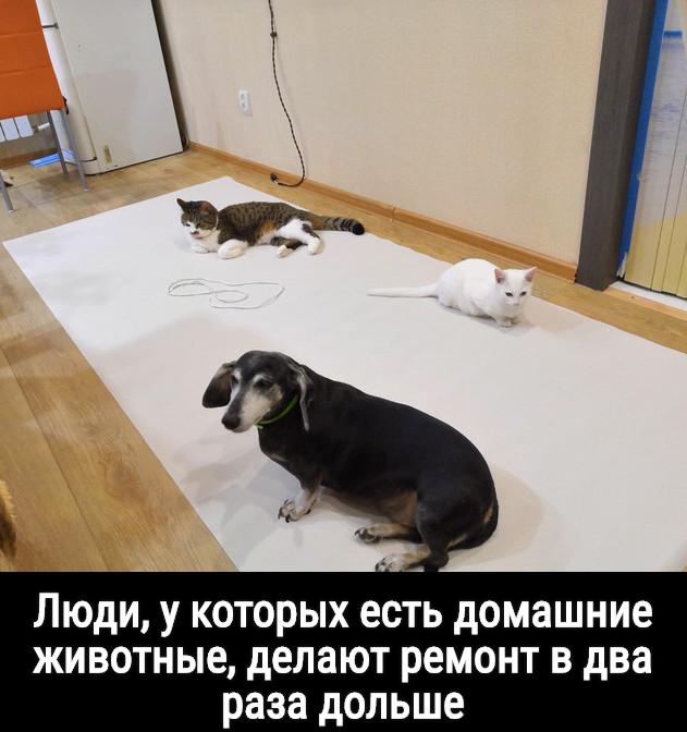 изображение: Люди, у которых есть домашние животные, делают ремонт в два раза дольше #Прикол