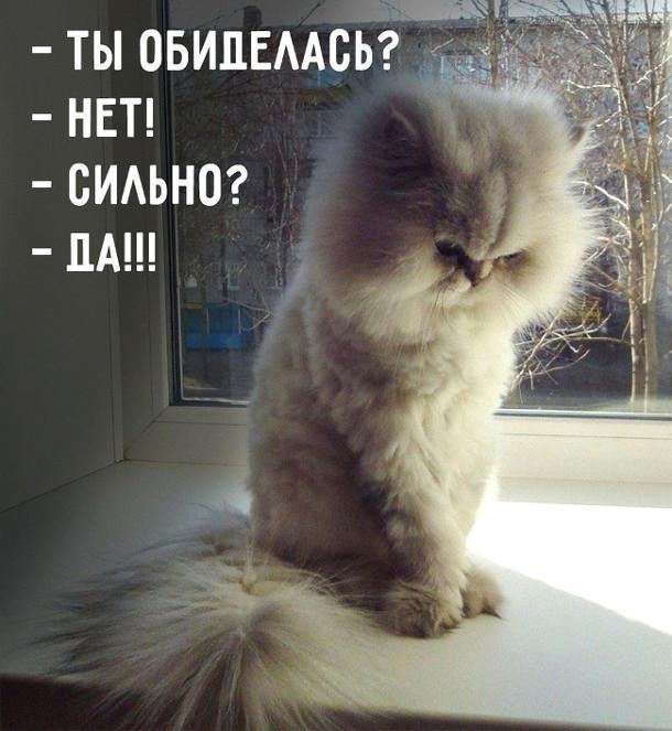 изображение: - Ты обиделась? - Нет! - Сильно? - Да!!! #Котоматрицы