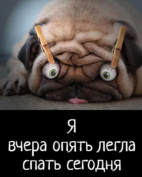 изображение: Я вчера опять легла спать сегодня #Прикол