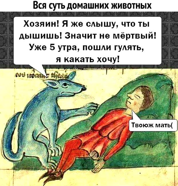 изображение: Вся суть домашних животных: - Хозяин! Я же слышу, что ты дышишь! Значит, не мёртвый. Уже 5 утра, пошли гулять, я какать хочу! - Твою ж мать! #Прикол