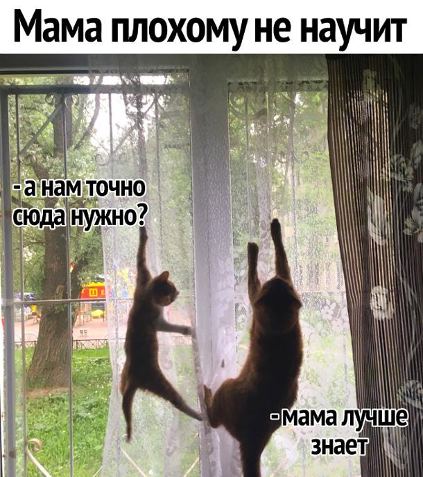 Мама плохому не научит: - А нам точно сюда нужно? - Мама лучше знает | #прикол
