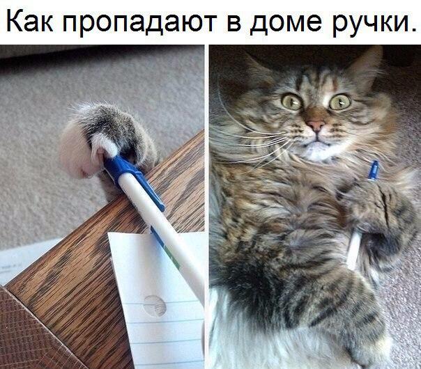 изображение: Как пропадают в доме ручки #Прикол