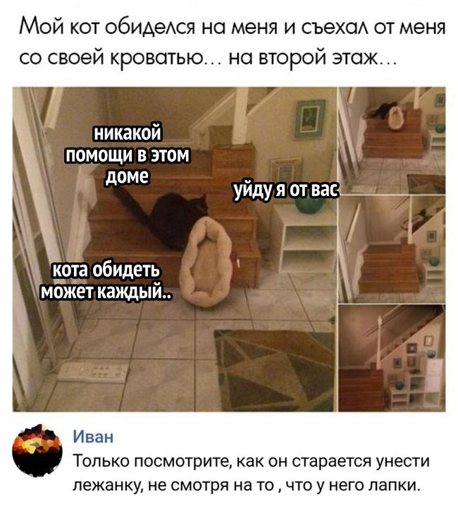 изображение: Мой кот обиделся на меня и съехал от меня со своей кроватью ... на 2 этаж ... - Никакой помощи в этом доме. Уйду я от вас. Кота обидеть может каждый. - Только посмотрите, как он старается унести лежанку, несмотря на то, что у него лапки #Котоматрицы