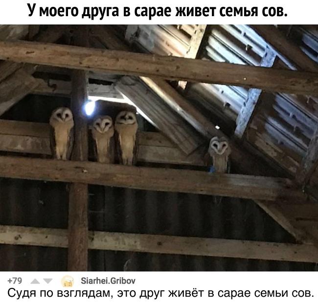 изображение: У моего друга в сарае живет семья сов. - Судя по взглядам, это друг живёт в сарае семьи сов. #Прикол