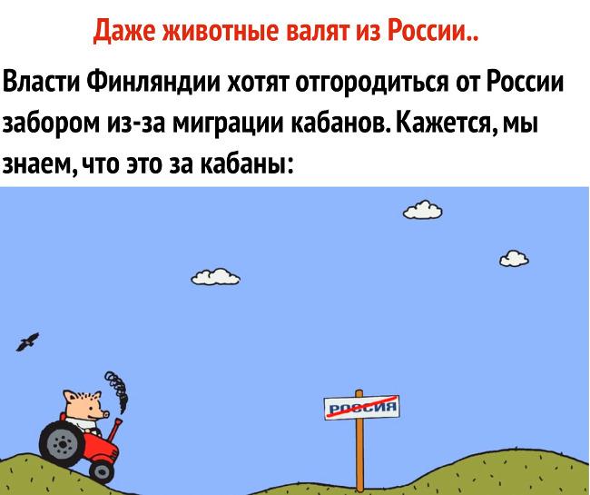 изображение: Власти Финляндии хотят отгородиться от России забором из-за миграции кабанов. Кажется, мы знаем, что это за кабаны. - Даже животные валят из России #Прикол