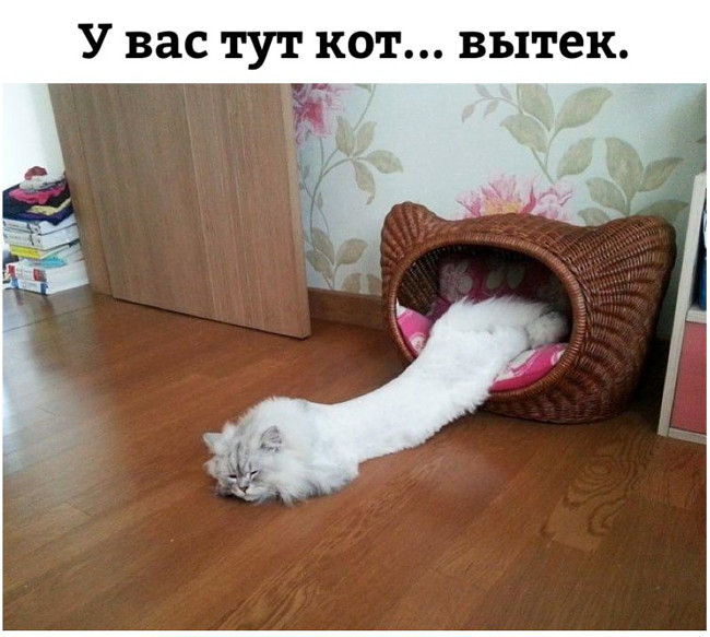 У вас тут кот ... вытек | #прикол
