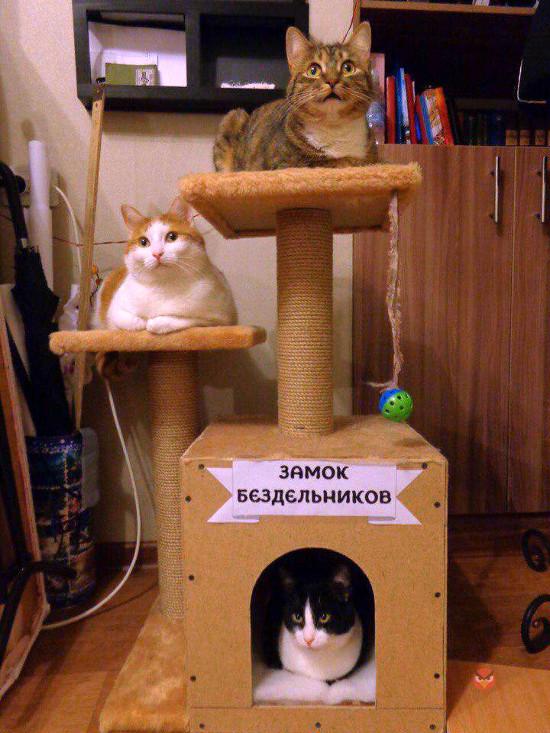 изображение: Замок бездельников #Котоматрицы