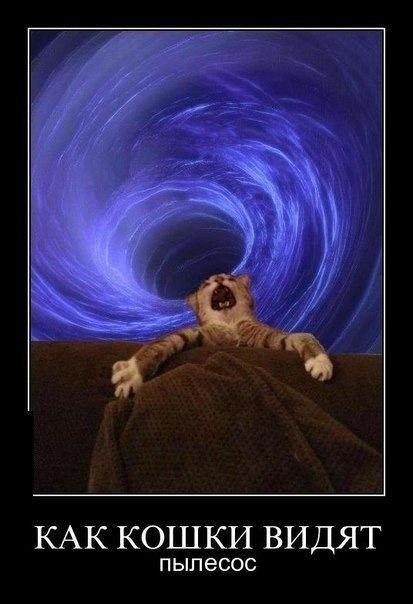 изображение: Как кошки видят пылесос #Прикол