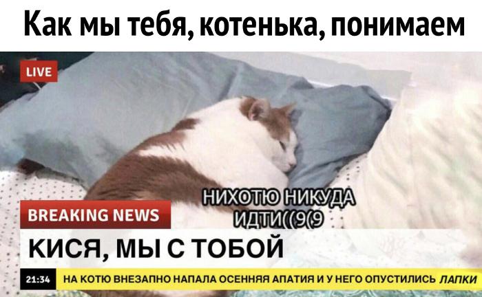 изображение: Breaking news: На котю внезапно напала осенняя депрессия и у него опустились лапки. - Не хочу никуда идти #Прикол
